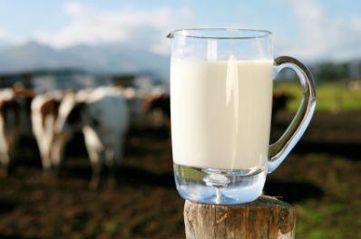 Productia de lapte de vaca este in scadere cu 9% in 2011