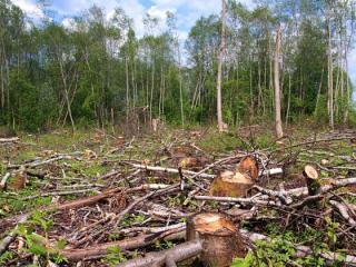 Cantitatea de lemn taiat ilegal confiscata a crescut cu 45% fata de anul trecut