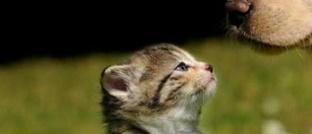Calatoria pisicilor pe distante lungi, mai sigura cu solutii specializate