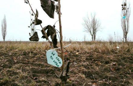 Noi perdele forestiere, sadite de 450 de voluntari, pentru protectia drumurilor si culturilor