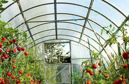 Lifestyle: 3 avantaje in construirea unui SOLAR de legume
