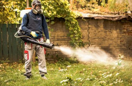 Dezinsectia si Dezinfectia – Doua servicii necesare pentru combaterea daunatorilor