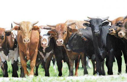 Producătorul lactatelor Olympus a investit 4 milioane de euro într-o staţie de producţie de biogaz la fabrica din Braşov