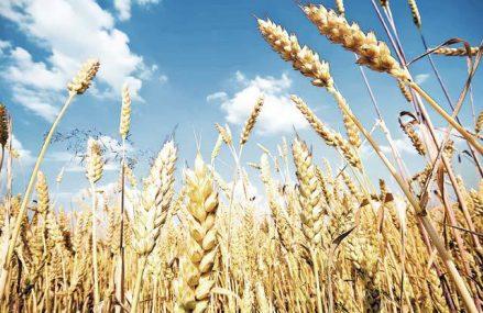 Ucraina, una dintre cele mai fertile ţări, vrea să hrănească lumea