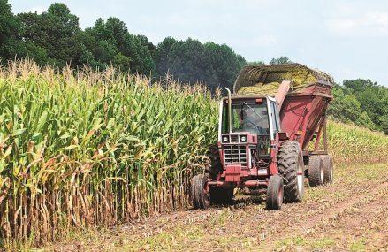 Care au fost cele mai creditate sectoare în ultimul an. Creditele pentru agricultură au trecut de pragul de 20 miliarde de lei la finalul lunii august 2020, după un avans anual de 12,4%