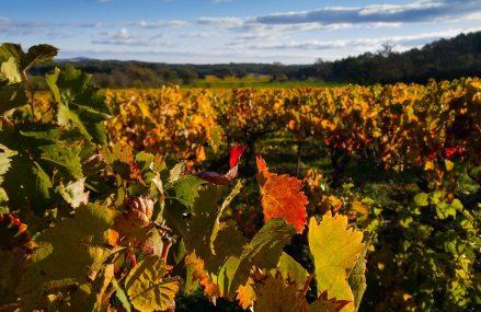 După aprobarea la Bruxelles, Guvernul dă drumul la schema de ajutoare de stat pentru producătorii de vin