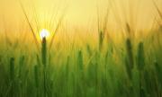 Sustenabilitatea și competitivitatea fermelor românești prin agricultura organică
