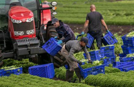 Lucrătorii sezonieri din România şi Bulgaria vor plăti mai mult decât toţi ceilalţi cetăţeni ai Uniunii Europene pentru a primi viză de muncă în Marea Britanie